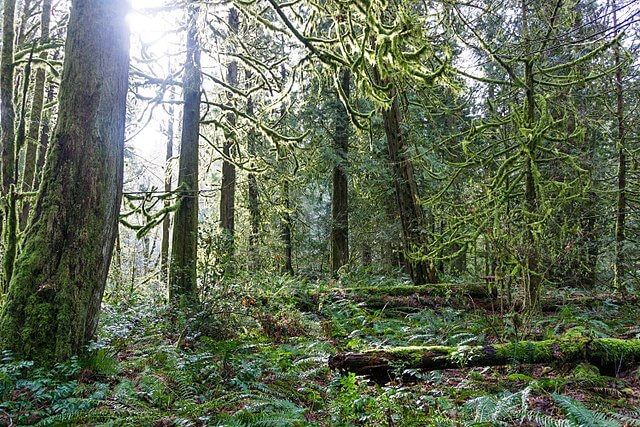 Goldstream Provincial Park in Victoria
